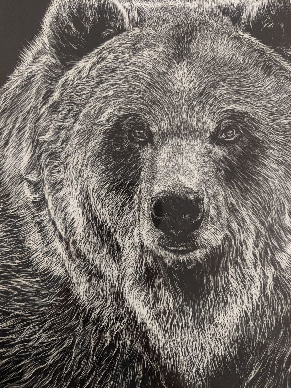 Grizzly Bear Etching
